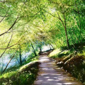Heather Howe – Autumn Walk (Degibna)